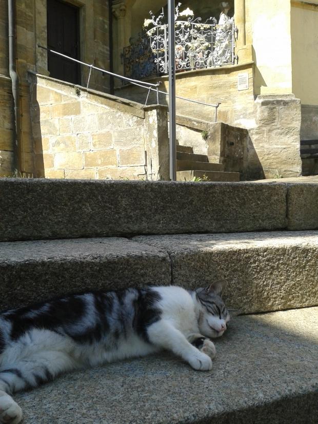 Auch Miezi pflegt nach dem Essen zu ruhen, gleich neben der Kirche.