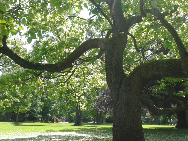 Prächtige alte Bäume prägen den Park.