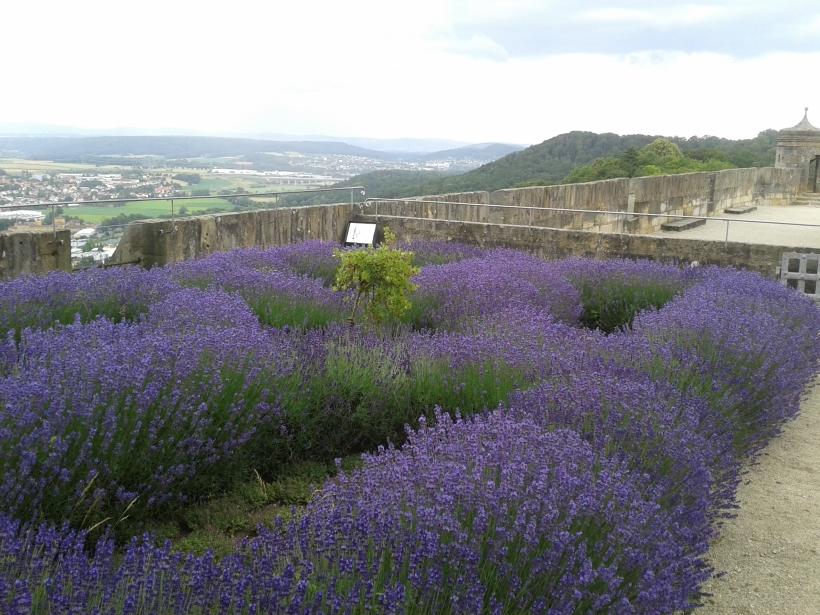 Mit Lavendel grüßt der Süden in den Norden.