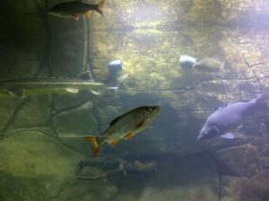 Happy Fisch im Haus am Teich
