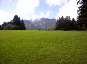 Grünes Gras und weiß-blauer Himmel,  kein Wunder, dass die Kühe hier besonders gute Milch geben. Man sollte ihnen vielleicht noch Weizen oder Helles zu trinken geben, dann wären sie rundum zufrieden.