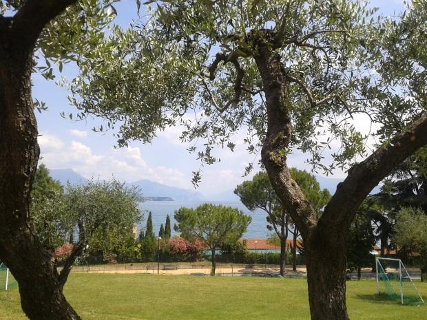 Statt Kastanien gibts halt in Italien Olivenbäume. Die spenden zwar weniger Schatten, sind aber dennoch schön anzuschauen