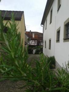 Der Rosmarin wächst prächtig in Franken am Main.